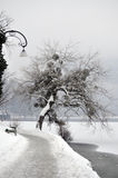 Winter by the Lake Royalty Free Stock Photography