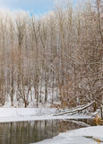 Winter Lake And Forest Royalty Free Stock Photos