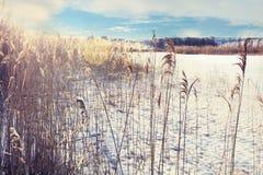 Winter lake bulrush Stock Photo