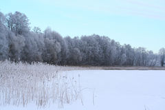 Winter lake and forest Stock Image