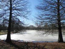Winter Lake 18. Frozen lake in winter with woods Royalty Free Stock Image