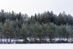 Winter in the lake. Icy cold forest. Frosty wood and ground.  Freeze temperatures in nature. Snowy natural environment Stock Image
