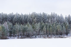 Winter in the lake. Icy cold forest. Frosty wood and ground.  Freeze temperatures in nature. Snowy natural environment Royalty Free Stock Images