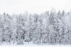 Winter lake scenery in finland Stock Images