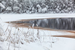 Winter lake shore with opened water in ice Royalty Free Stock Photos