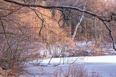 Winter by the lake with snow and frost royalty free stock image