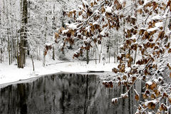 Winter lake and trees covered with snow Royalty Free Stock Images