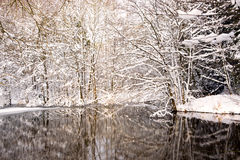 Winter lake and trees with snow. Stock Images