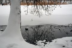 Winter on the lake. Trunk of a tree in the snow. Thawed patch on the frozen lake in the winter Royalty Free Stock Photos