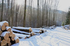 Winter land Royalty Free Stock Photography
