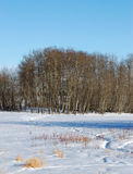 Winter land in elk island Stock Photos
