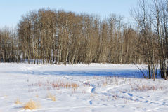 Winter land in elk island Stock Photo