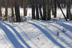 Winter land and trees in elk island Stock Image