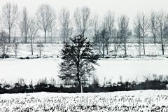 Winter landascape Stock Photography
