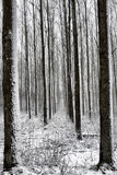 Winter landcape 3 Royalty Free Stock Images