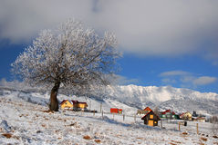 Winter landmark in Romania. Winter landscape in Sirnea village (this is the first touristic village from Romania) with isolated houses royalty free stock images