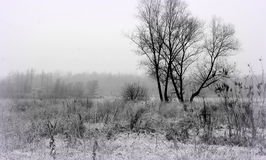 Winter landsape. Winter landscape with a tree and a frozen field Stock Photography