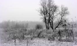 Winter landsape Stock Photography