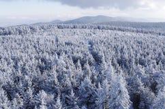 Winter landsape Stock Images