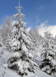 Winter landscape 1. Winter mountain landscape with snow - covered fir-trees Royalty Free Stock Photography