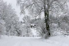 Winter landscape. Zervynos village, Lithuania Stock Photography