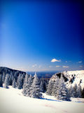 Winter landscape. Blue sky and pine woods Royalty Free Stock Image