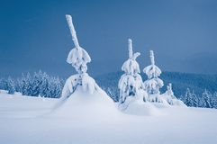 Winter landscape. Be single conifers are in mountains, Carpathians, Ukraine Stock Photography