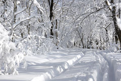 Free Winter Landscape Stock Photography - 12195632