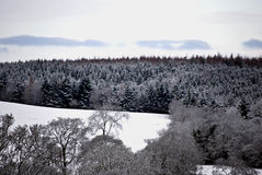 Winter landscape. Forest covered in snow with single deciduous trees in the foreground and white open plane in between Stock Images
