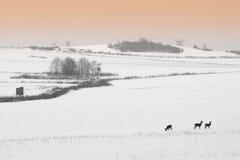 Winter landscape. View of winter landscape roe Stock Photos