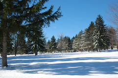 Winter Landscape. With beautiful pine trees stock photography