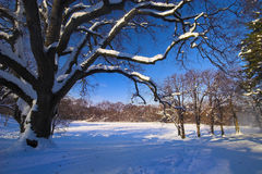 Winter landscape. Natural landscape covered with snow Stock Image