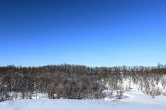 Winter landscape. A wide view of a winter landscape with snow, trees, and a beautiful blue sky. Shot in rural North Dakota and image has copy space Stock Photography