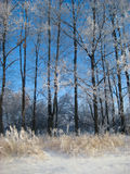 Winter landscape. With snowy trees and blue sky royalty free stock image