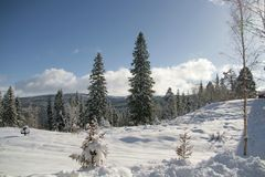 Winter landscape. With snow in Norway Stock Image