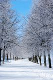 Winter landscape. Winter trees covered with frost Stock Image