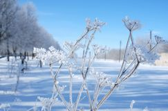 Winter landscape. Bright winter landscape, branch with snowflakes Stock Photo