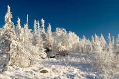 Winter landscape. Trees under snow after snow-storm Stock Photo