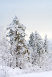 Winter landscape. Trees under snow after snow storm Stock Photos