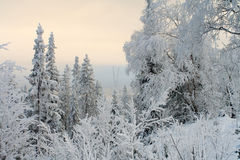 Winter landscape. Trees under snow after snow-storm Royalty Free Stock Photo