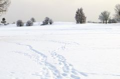 Winter landscape. With footprint in snow stock images
