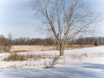 Winter Landscape. This is a shot of a snowy winter landscape in New Jersey stock photography