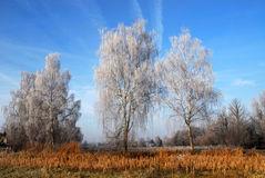 Winter landscape. The picture shows a winter landscape with a couple of frosted trees. Sunny day, blue sky stock photography