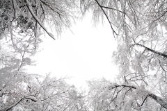 Winter landscape. With snow covered trees Stock Photos