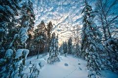 Free Winter Landscape Stock Photos - 17593453