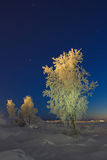 Winter Landscape. A tree covered with snow against the starry sky Royalty Free Stock Photo