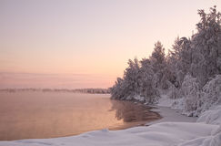 Winter Landscape. The tree is covered with snow on the lake Royalty Free Stock Images