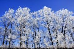 Winter landscape. Snowy winter trees under blue sky Royalty Free Stock Photo