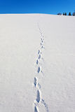 Winter landscape. With animal tracks Royalty Free Stock Photography