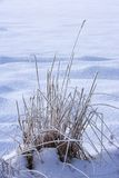 Winter landscape. Photo of soft winter landscape Stock Photography